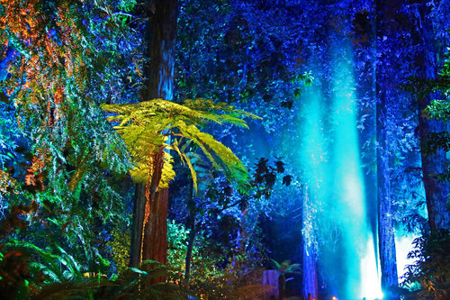 魔幻森林灯光投影秀 magic forest light projection show